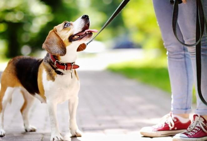 Antes de tomar todas as vacinas, pets não devem passear
