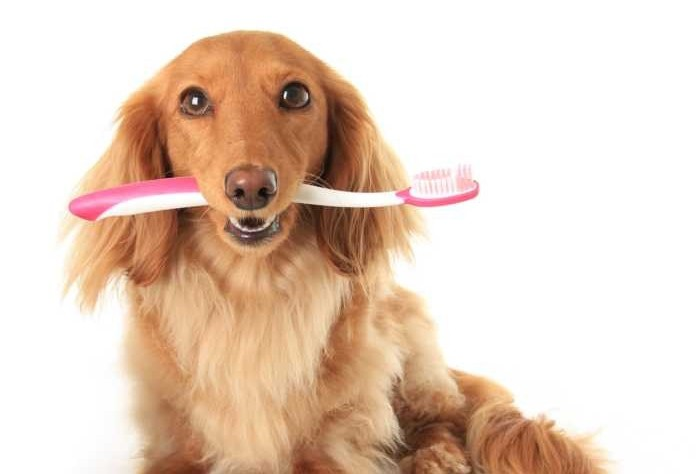 Como cuidar bem dos dentes dos pets e evitar o mau hálito