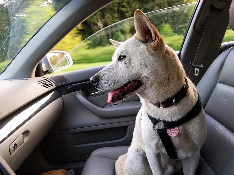 Animal de estimação pode ir a qualquer lugar com o dono?
