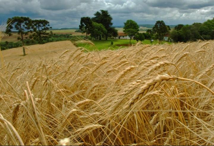 Cotações de produtos agrícolas: quinta-feira [26 de setembro]