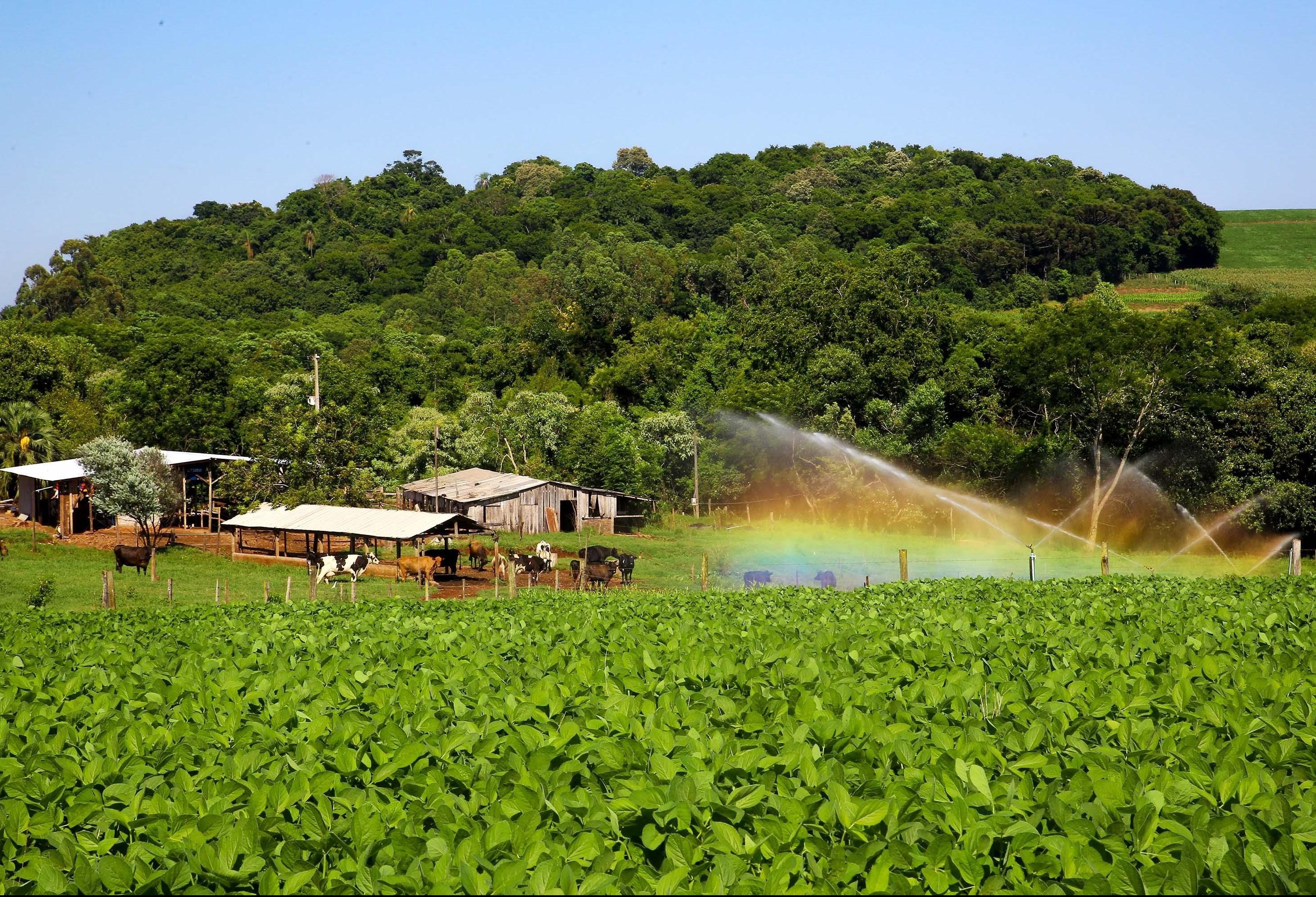 Agricultores paranaenses preservam a natureza além do que exige a lei