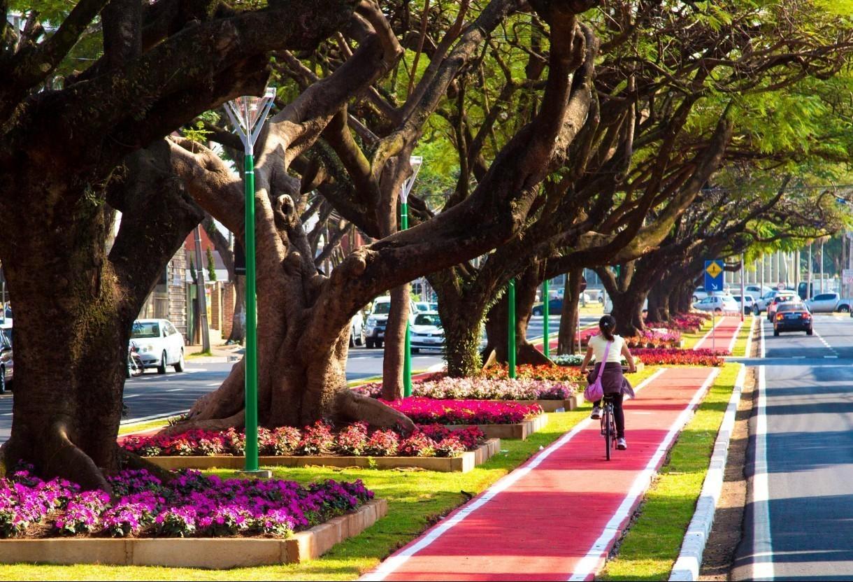 Comdema aprova e Plano de Arborização irá para consulta pública