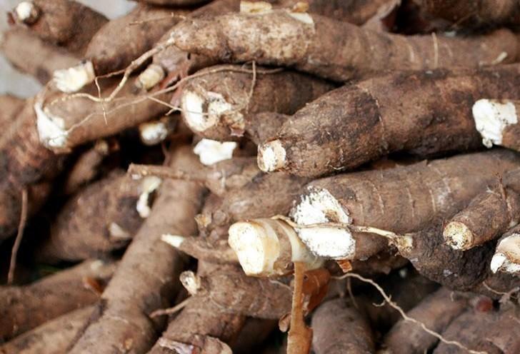 Tonelada da raiz de mandioca custa R$ 330