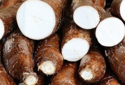 Tonelada da raiz de mandioca custa R$ 290 em Campo Mourão