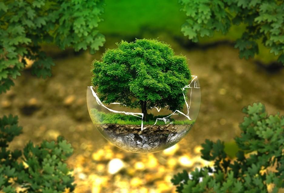 Gilson Aguiar: 'árvores são necessárias'