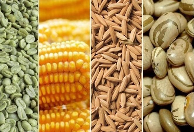 Produção nacional de grãos é estimada em 241,3 milhões de toneladas