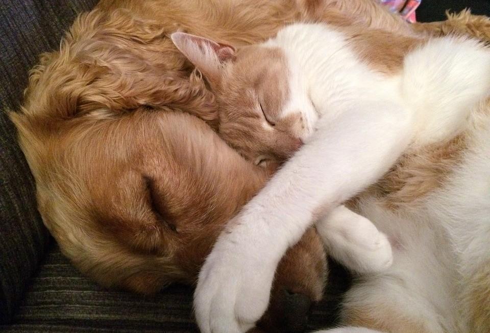 Cães e gatos podem viver juntos dependendo da personalidade de cada um