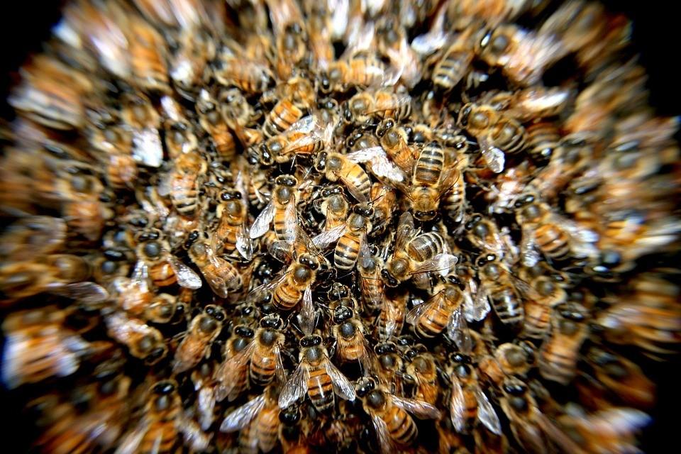Você sabe o que fazer caso encontre um enxame de abelhas na sua casa?