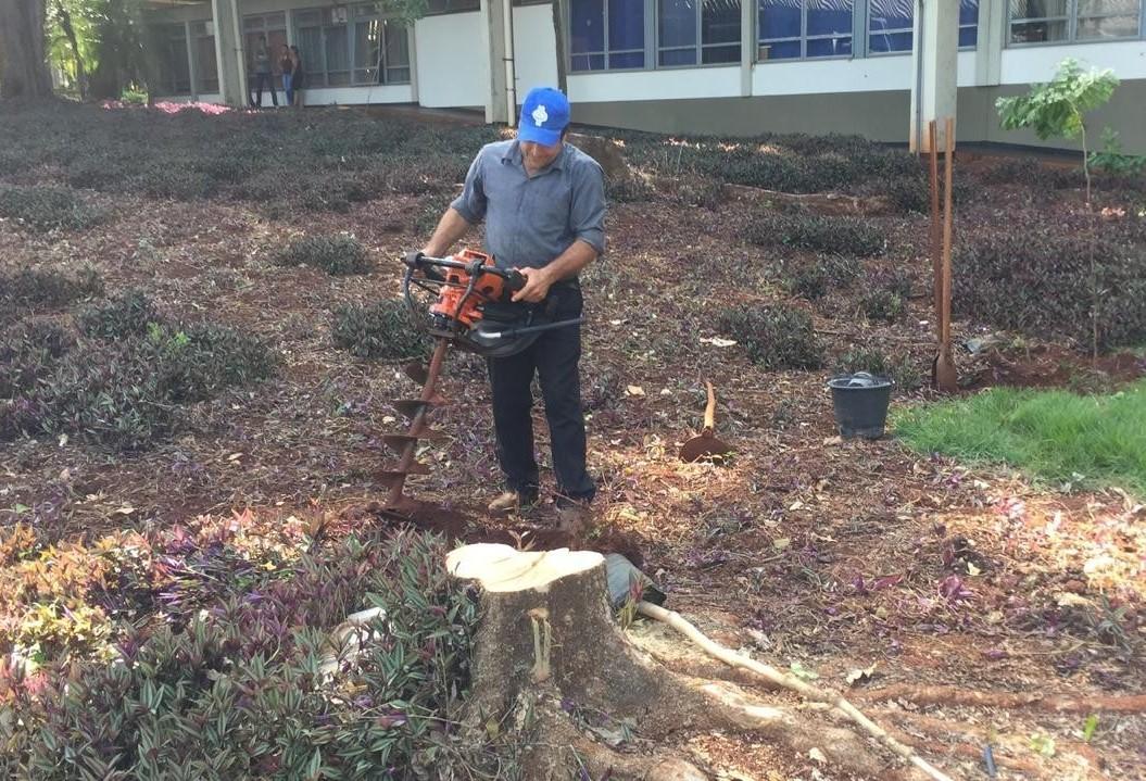 UEM é multada em R$ 28.500 por corte irregular de árvores