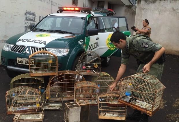 Você sabe quem recolhe animais silvestres em Maringá?