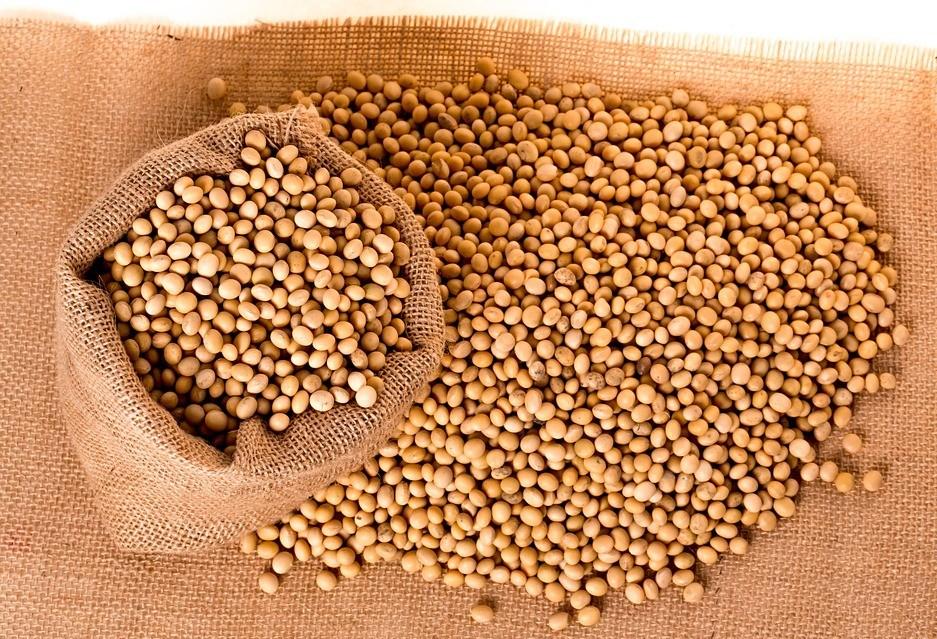 Soja custa R$ 63 em Maringá
