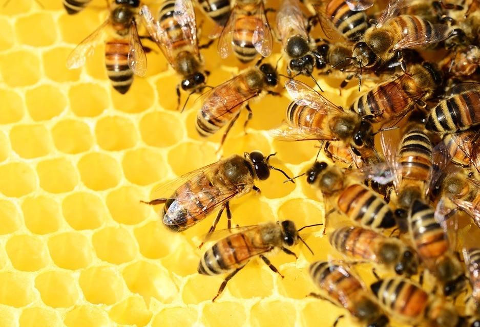 Abelhas são as principais polinizadoras do mundo