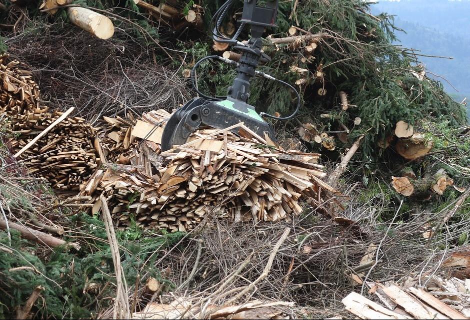 Paraná quer criar parceria com grandes empresas para gerar energia a partir de biomassa