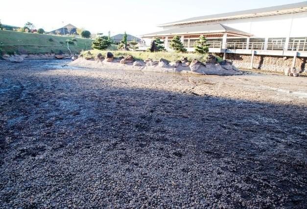 500 carpas serão colocadas em tanques no Parque do Japão