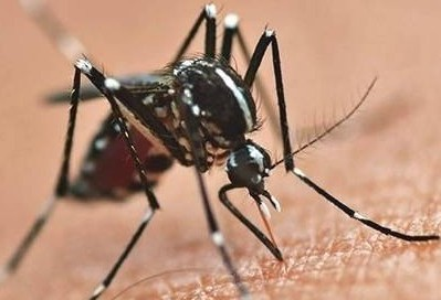 15ª Regional de Saúde tem 151 casos de dengue confirmados