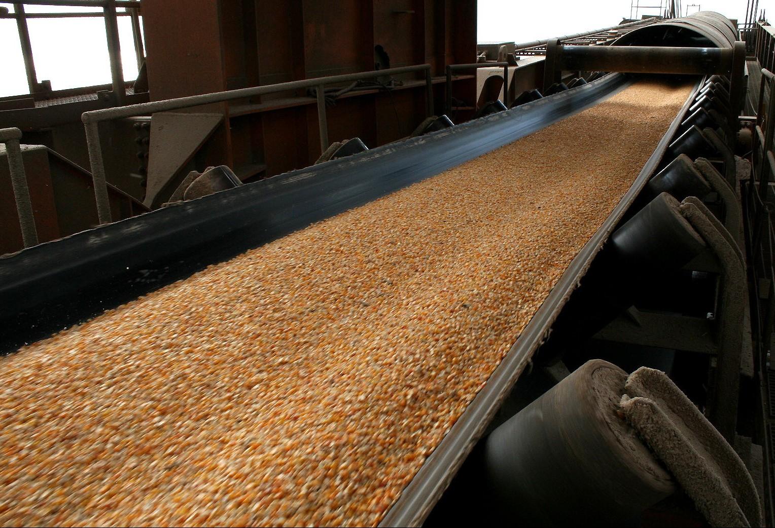 Em cinco anos, Brasil pode ultrapassar os EUA como maior exportador de milho