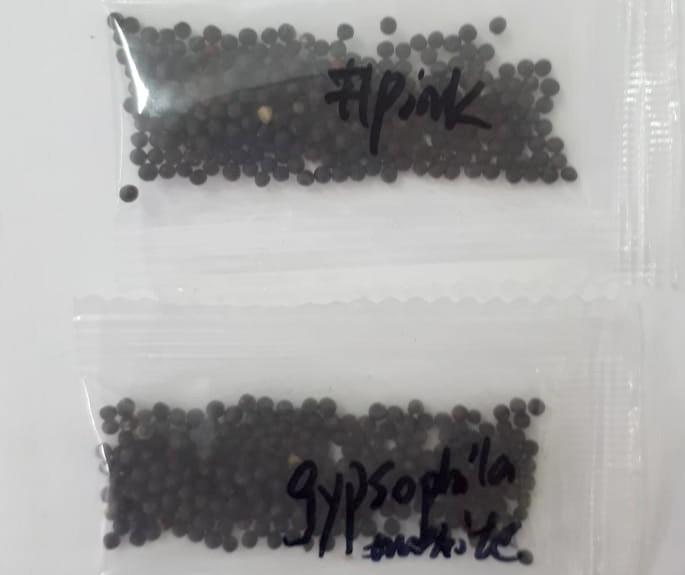 AEP orienta sobre pacotes de sementes não solicitadas