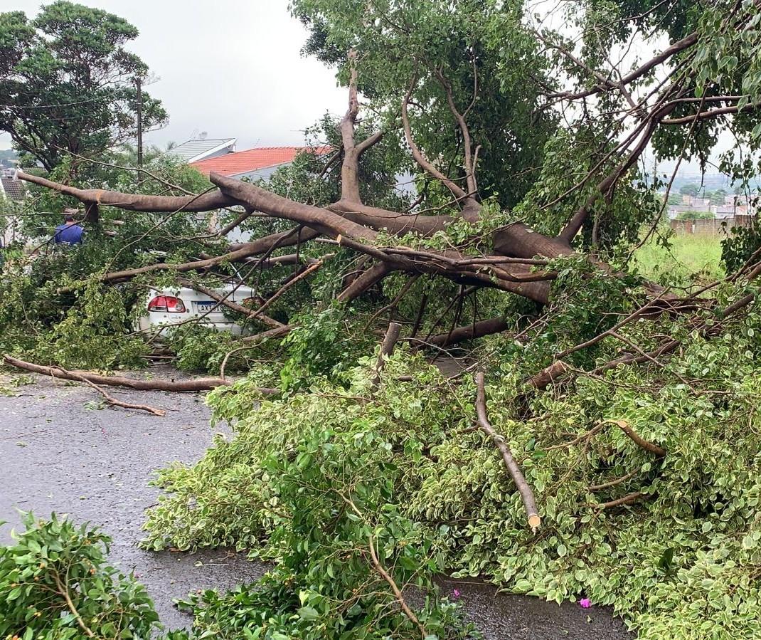 7.500 imóveis ficaram sem energia em Maringá nesta quinta-feira (7)