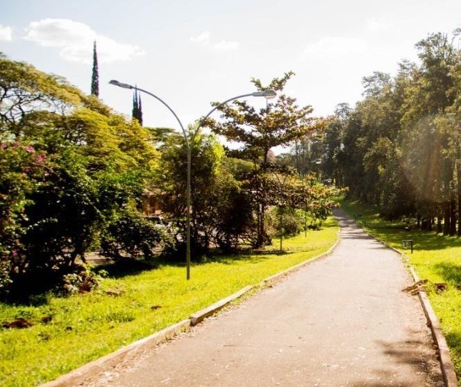 Plano de Arborização será discutido em audiência pública