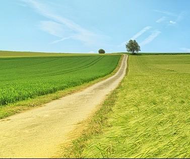 """Projeto """"Melhorias Contínuas""""  traz benefícios na organização de propriedades rurais"""