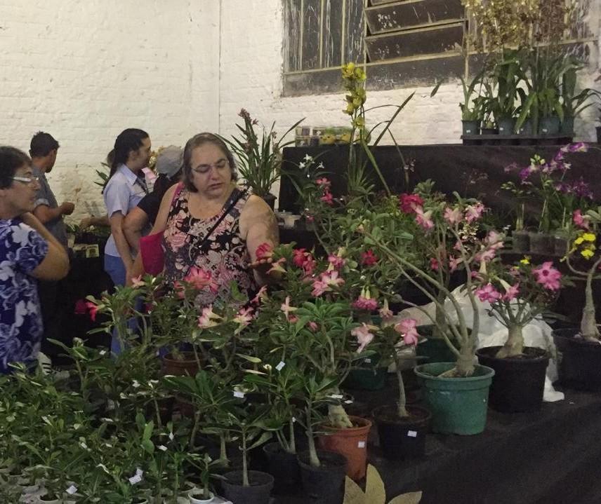 Feira regional de produtores de flores muda de local na Expoingá