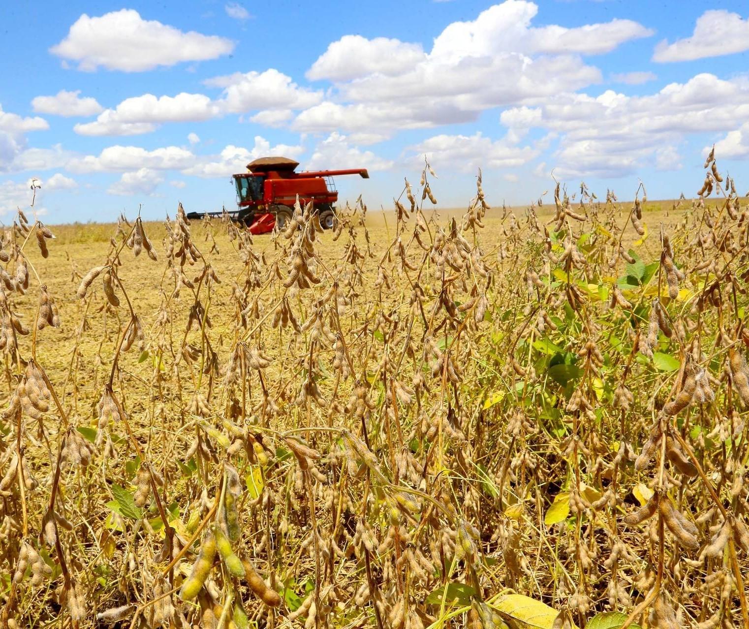 Produtividade da soja aumenta com um inverno bem conduzido