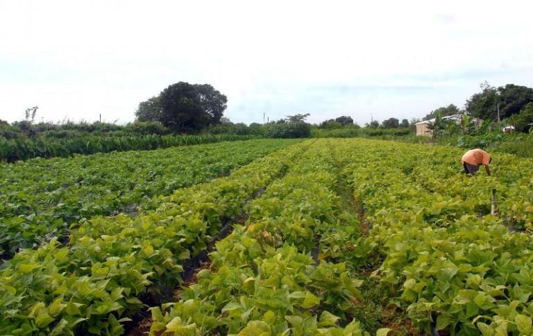 Curso auxilia produtores no manejo responsável de pragas