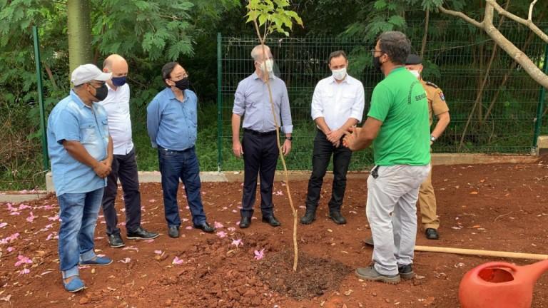 Maringá planta muda de ipê-roxo em homenagem às primeiras vítimas
