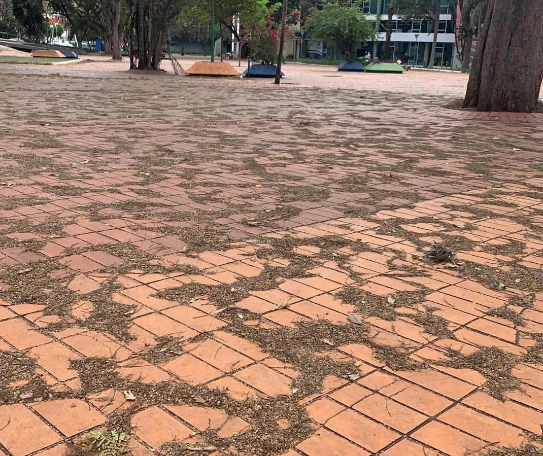Chuva vai carregar folhas de árvores para os bueiros