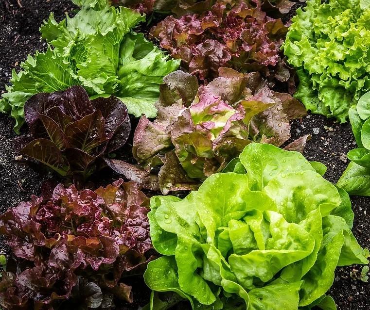 10 dicas para ser mais sustentável