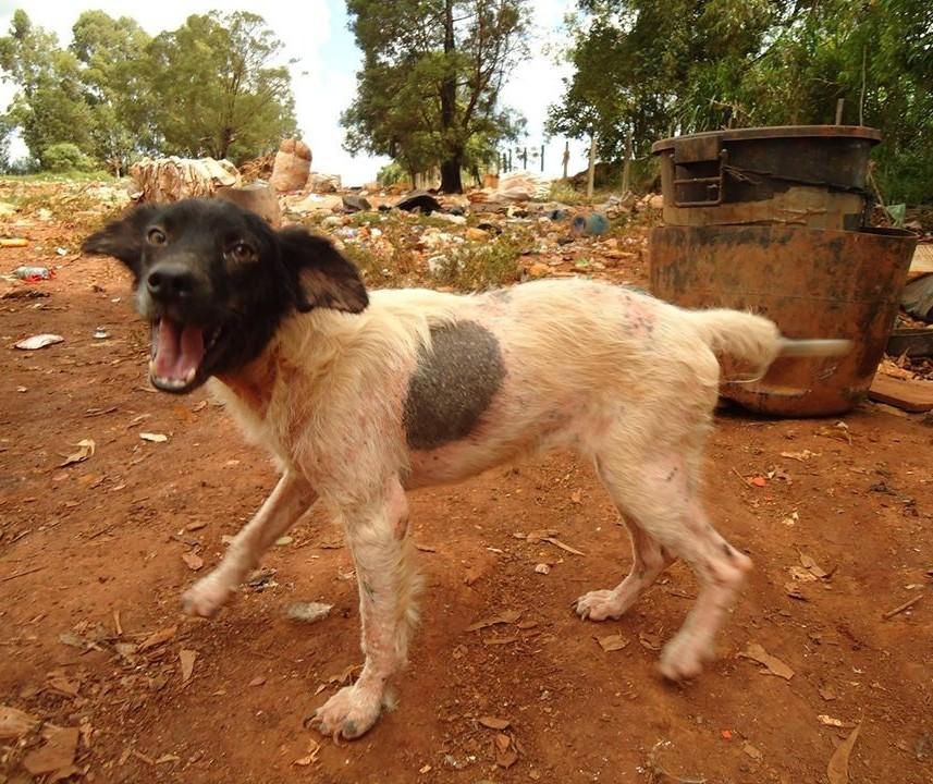 ONGs tentam uma solução para animais que vivem em lixão