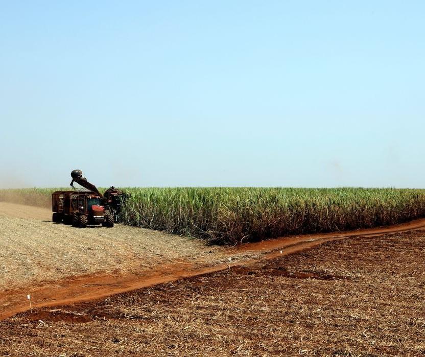Plantio da soja safra 2021/2022 está adiantado