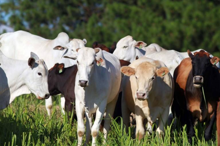 Preços da arroba de gado começam a recuar nas principais praças