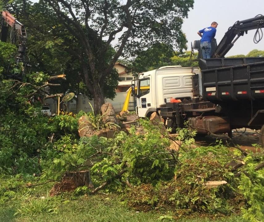 Temporal desse domingo (27) derrubou mais de 30 árvores em Maringá