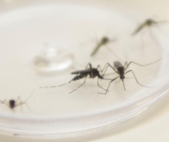 Saúde já confirmou 21 casos de dengue neste ano em Maringá