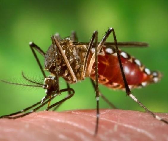 Maringá registrou seis vezes mais mortes por dengue no período 2019/2020 do que o anterior