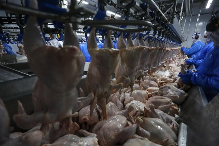 Brasil exportou 396 mil toneladas de carne de frango em março