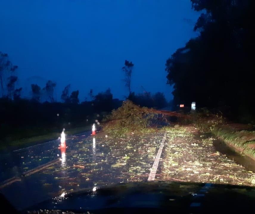 Chuva forte derruba árvores na BR-376 em Paranavaí