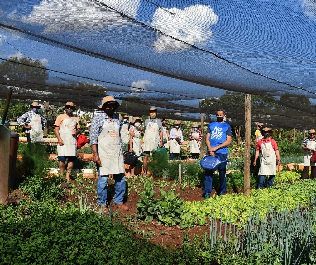 Cultivar Energia evita ocupação irregular debaixo de linhas de distribuição