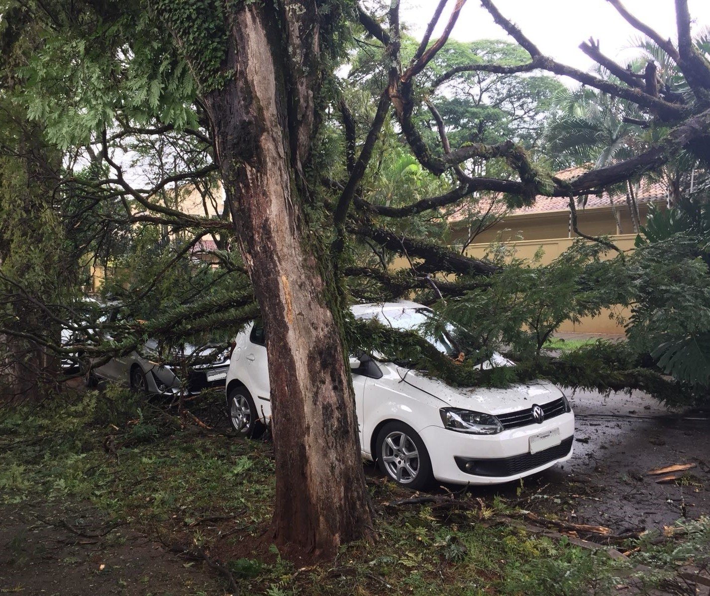 Chuva derruba árvore sobre veículo e casa na Zona 5