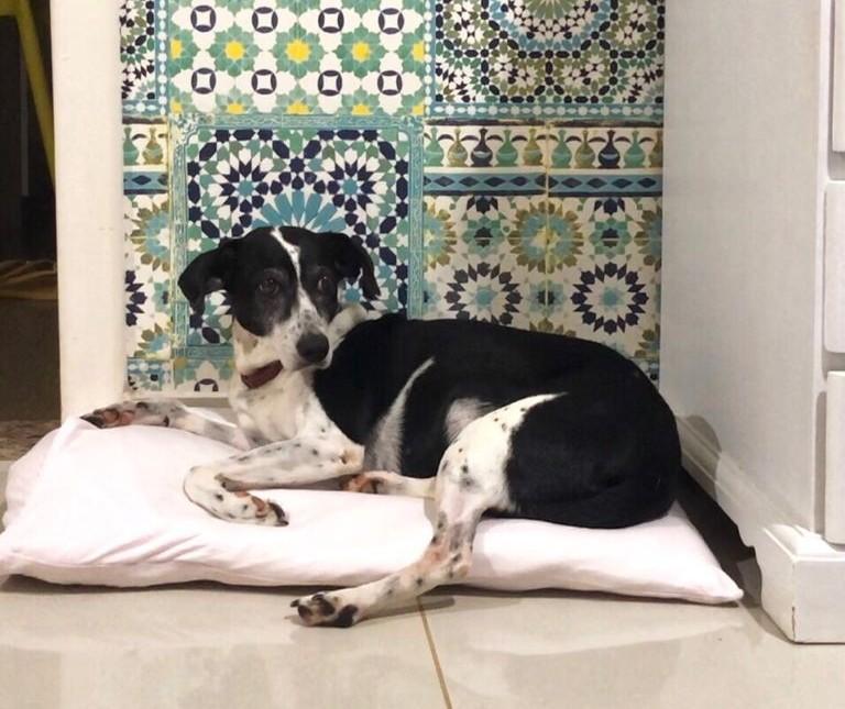 Em quatro anos, 1067 cães e gatos foram adotados em Maringá