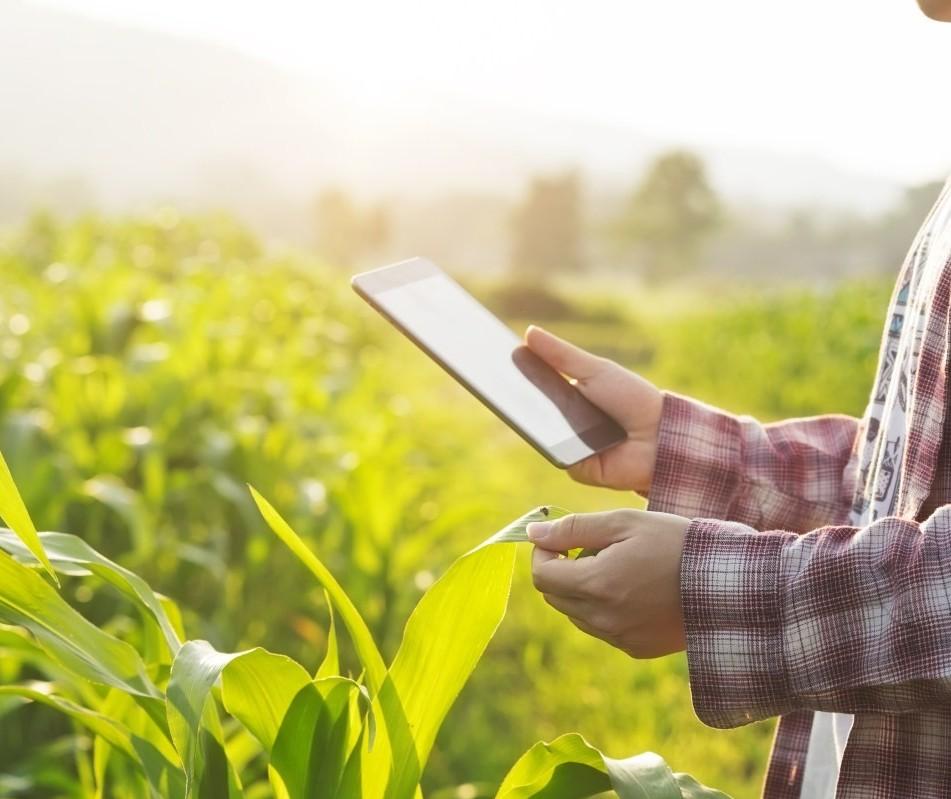 Cresce a relação entre o agronegócio e o e-commerce