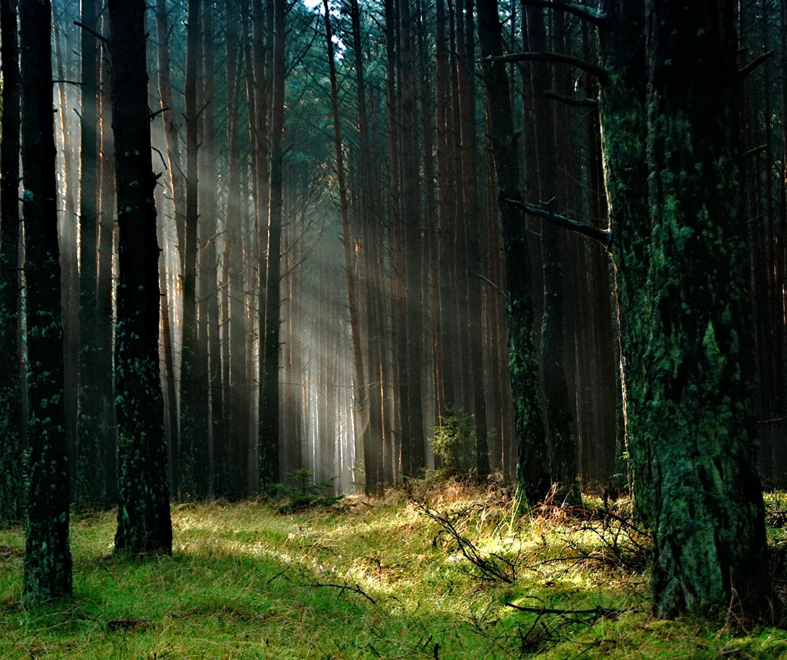 5 de junho: Dia Mundial do Meio Ambiente