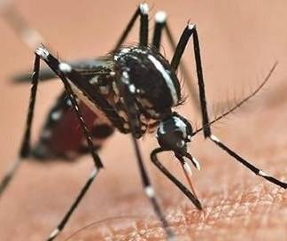 Em uma semana, 20 novos casos da doença são confirmados em Maringá
