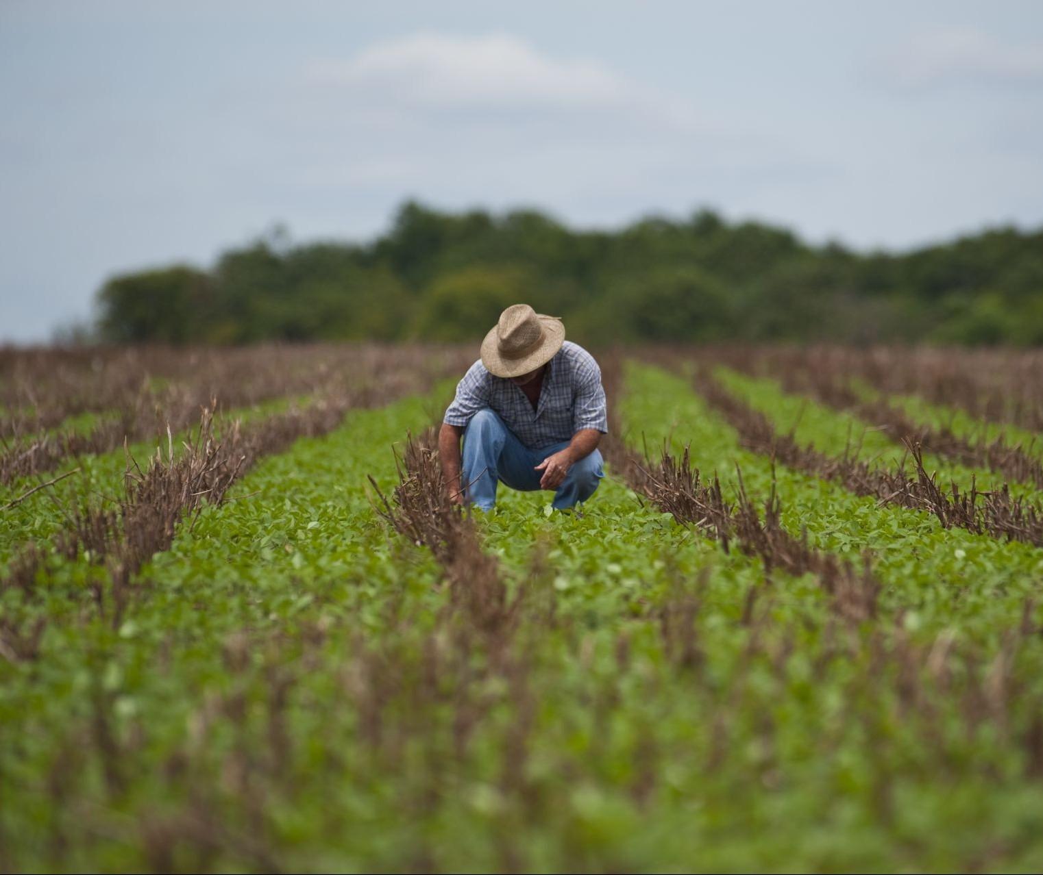 Após o STJ julgar o Plano Collor no crédito rural, será que o assunto finaliza?