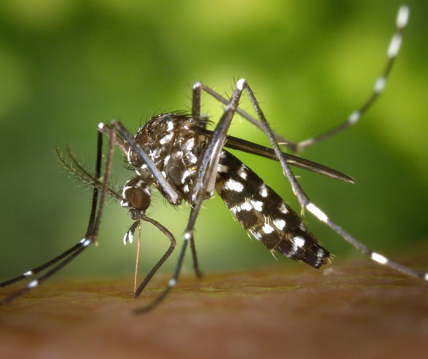 Com mais de 1.500 casos confirmados, Maringá está em epidemia de dengue