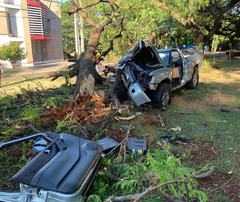 Câmera flagra momento em que motorista perde o controle e bate em árvore em Maringá; vídeo