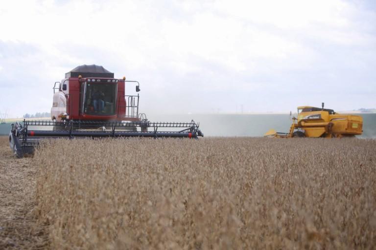 Planejamento da safra de inverno: o que o produtor precisa saber?