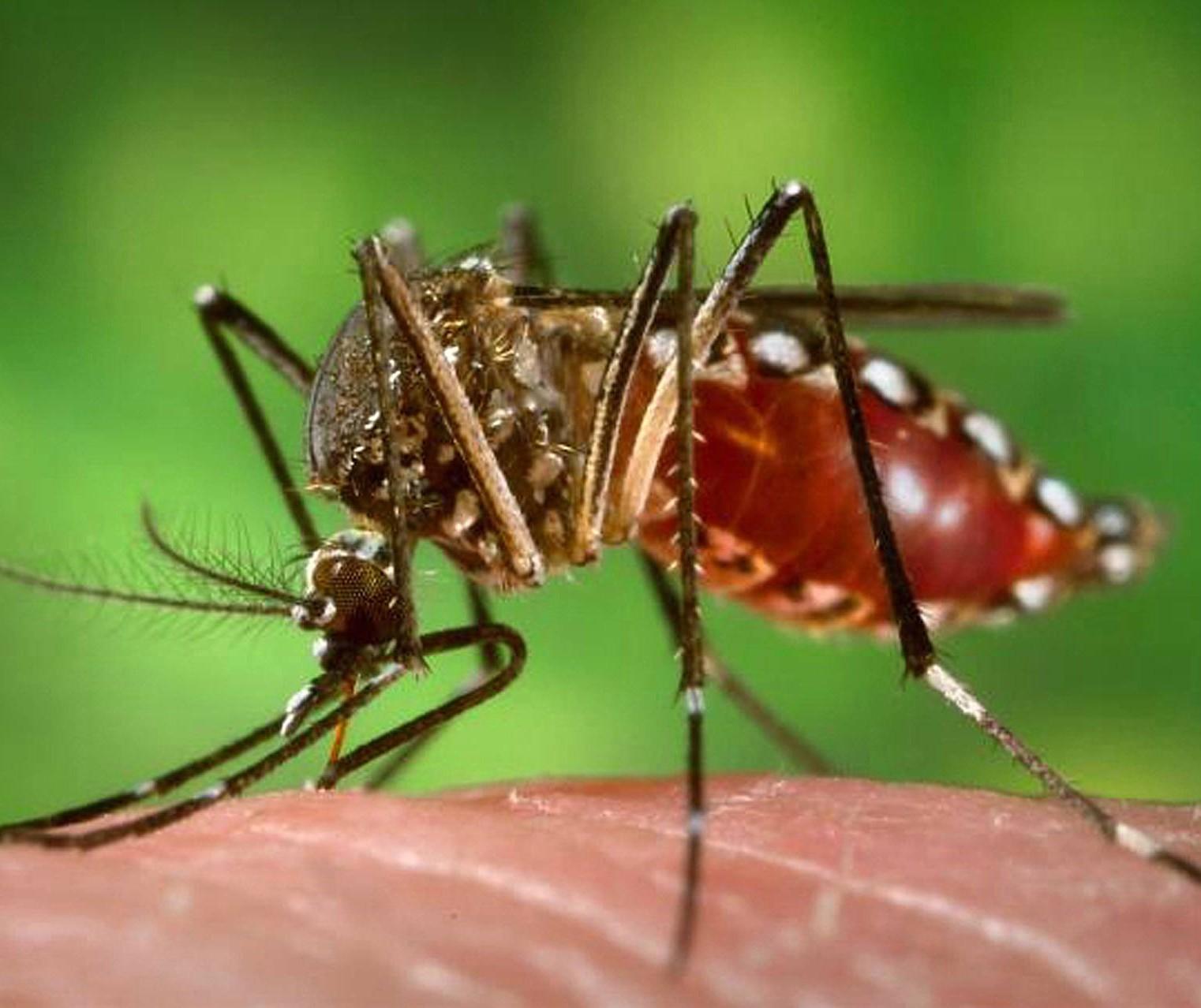 Maringá e Itambé têm mais casos de dengue na área da 15ª Regional de Saúde
