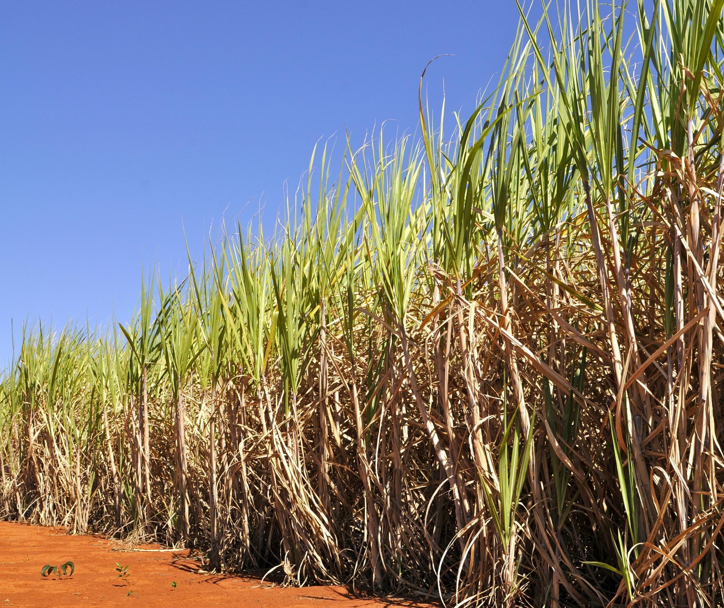 País confirma recorde na produção de etanol: 35,6 bilhões de litros na safra 2019/20